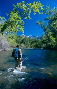 Sun Valley fly fishing on the Lost River