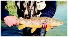 Little Wood Brown, another Sun Valley flyfishing special